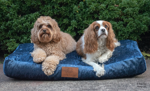 I dream of velveteen - Navy Dog Bed