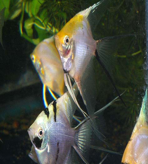Why Quarantine For New Fish Is So Important
