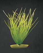 Hairgrass 8""
