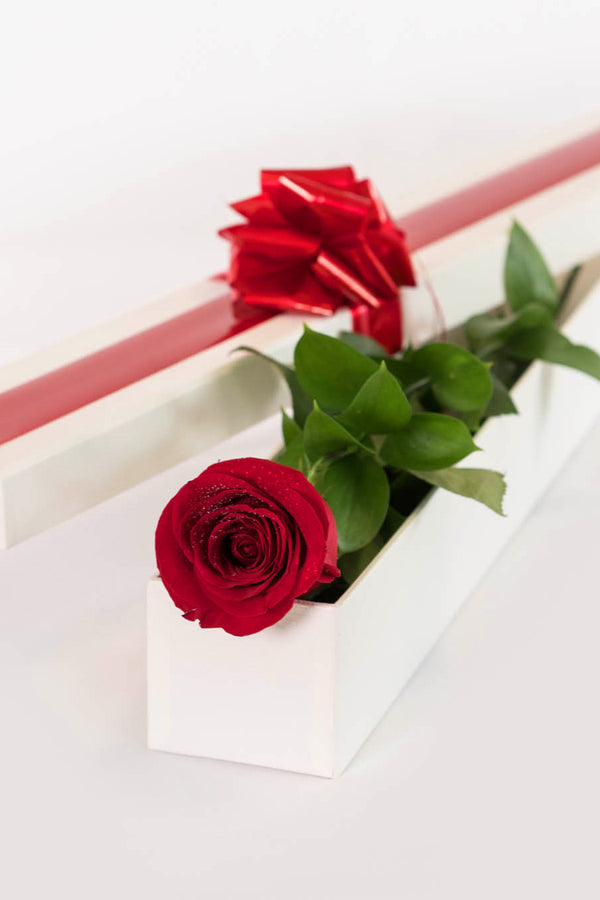 A Perfect Colombian Rose In Gift Box