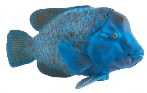 Animal Planet Blue Groper