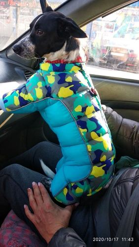 Cozy Winter Jacket for Dogs