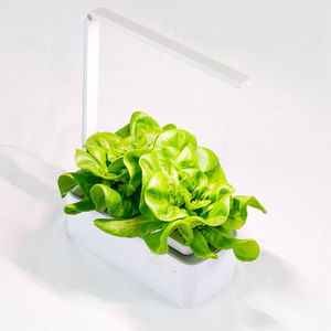 Indoor Smart Garden Kit