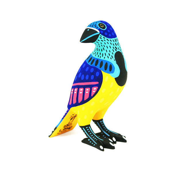 Luis Pablo: Blue & Yellow Tanager ~ Bird Collection