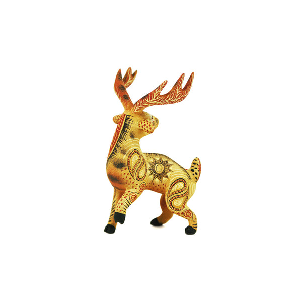 Rocio Fabian: Beautiful Miniature Deer
