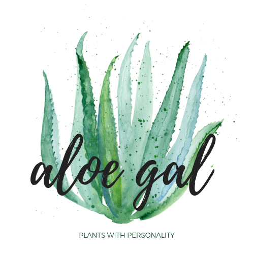 Super Easy to Care for Plants Shipped to you or Someone Special across Canada.  Become a Plant Lover.  Makes the Perfect Gift.  Planters, Aloe Vera Plants, Snake Plants, ZZ Plants, Spider Plants, Cactus, Ferns, Pothos Plants,
