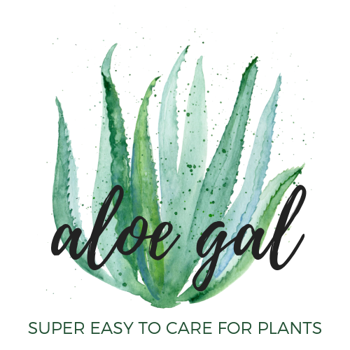 Super Easy to Care for Plants Shipped to you or Someone Special across Canada.  Become a Plant Lover.  Makes the Perfect Gift.  Indoor Plants, House Plants, Planters, Aloe Vera Plants, Fiddle Leaf Fig, Snake Plants, ZZ Plants, Spider Plants, Cactus, Ferns, Pothos Plants,