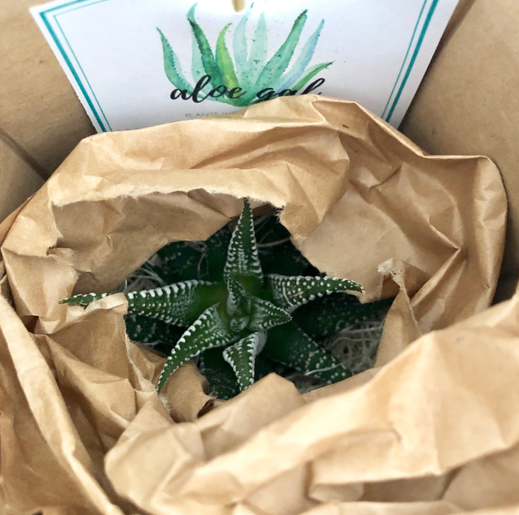 Custom Plant Packaging