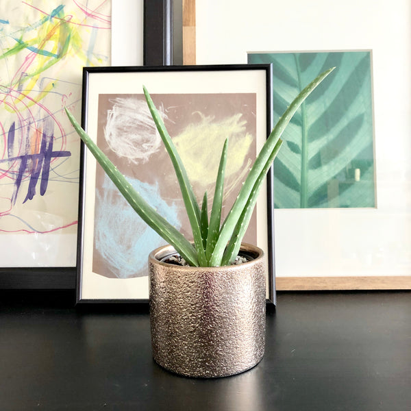 Aloe Vera Plant in Metallic Bronze Planter Pot with Texture Pattern_Aloe Gal Plants and Decor