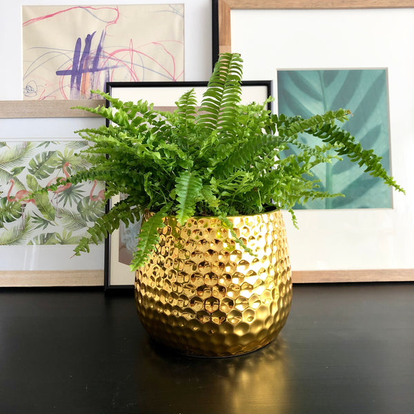 Boston Fern in Gold Honeycomb Planter Pot_Aloe Gal Plants & Decor