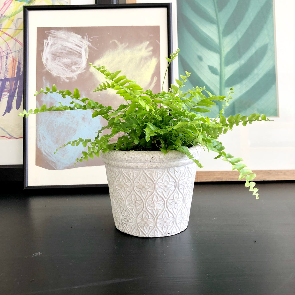 Fernando La Fleur the Fern (Small)