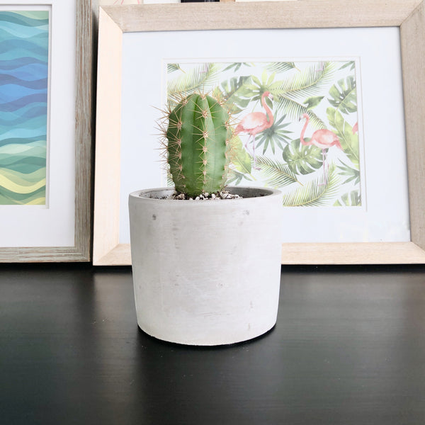 Cactus in Natural Grey Cement Planter Pot_Aloe Gal Plants & Decor