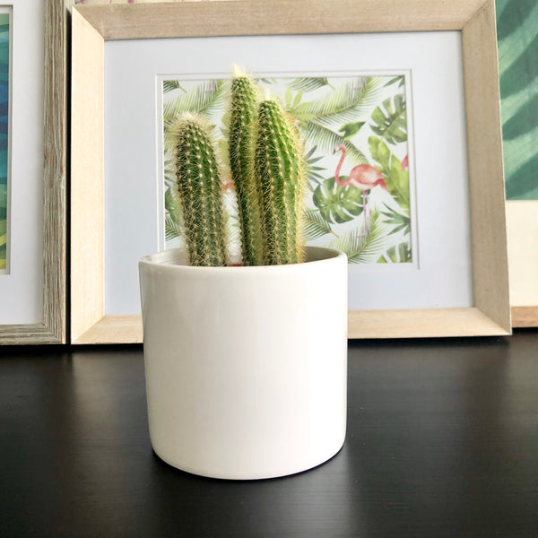 Cactus in White Ceramic Planter Pot_Aloe Gal Plants & Decor