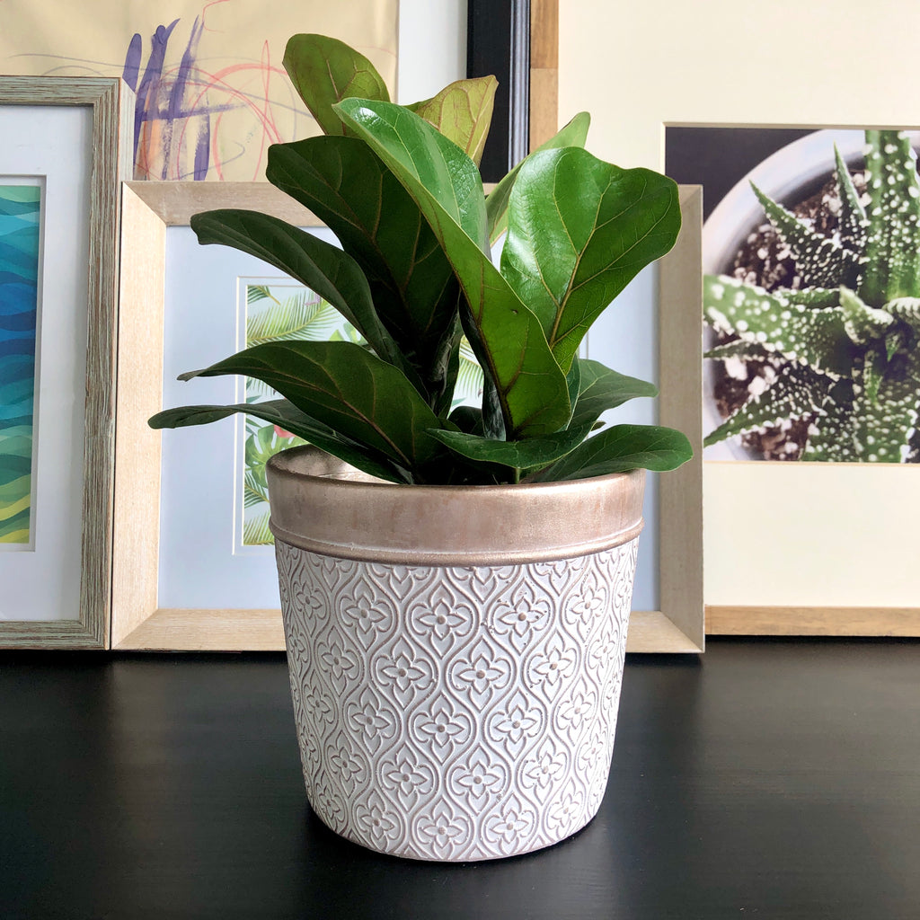 Fiddle Leaf Fig in Rose Gold Floral Arabesque Pattern Planter Pot__Plants_Houseplants_Plant Gifts_Online Plant Delivery_Aloe Gal Plants & Decor