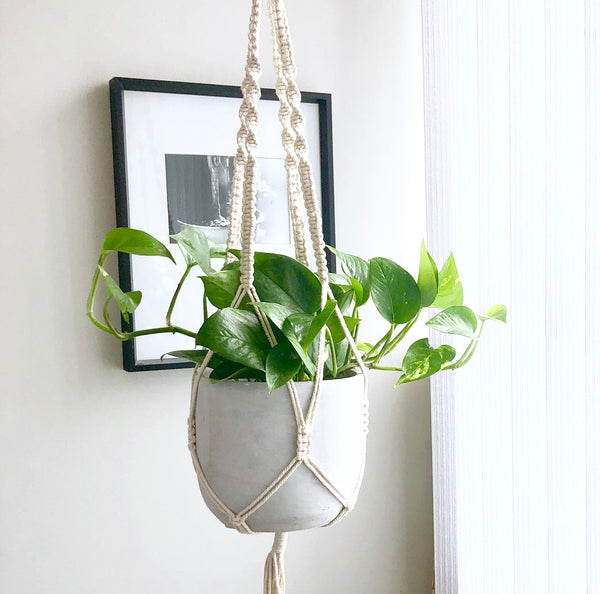 Macrame Plant Holder with Pothos; Aloe Gal Plants & Decor