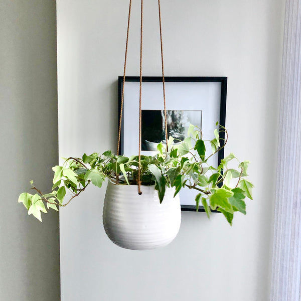 Ivy in White Ceramic Hanging Planter Pot_Aloe Gal Plants & Decor