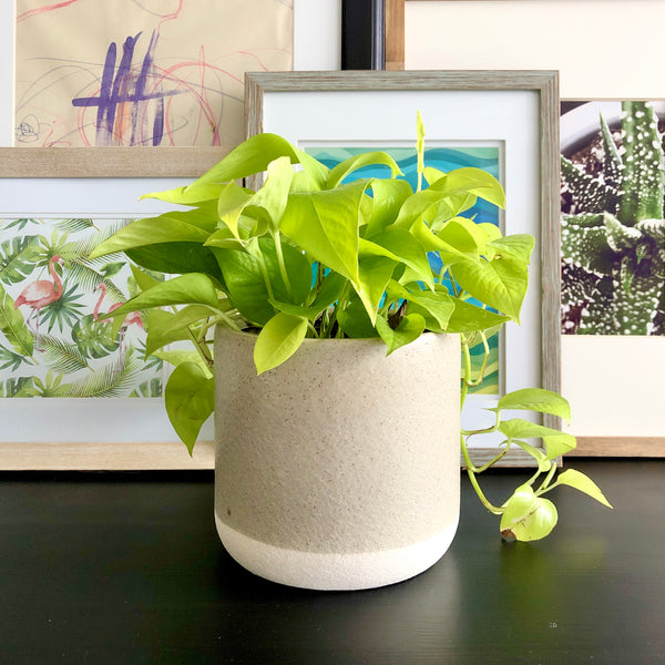 Perry Neon the Pothos Speckled Sand (Medium)