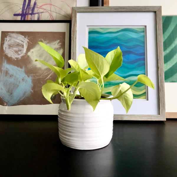 Perry Neon Lico the Pothos (Small)
