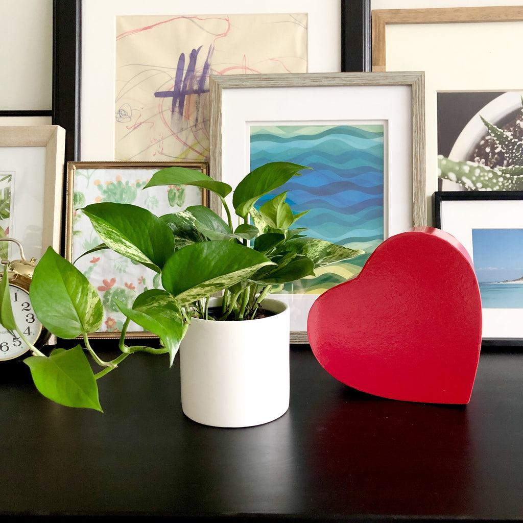 Golden Pothos in White Ceramic Planter Pot__Plants_Plant Gifts_Valentine's Day_Aloe Gal Plants & Decor