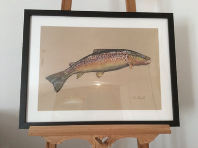 Brown trout jumping by Juan Bosco (Large)