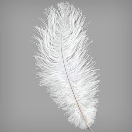 Ostrich Amp Peacock Feathers My Wedding Store