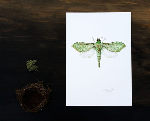 Pepe Tuna / Puriri Moth - an open edition Nocturne Print