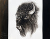 Bison 2016 - an Original Indian Ink Illustration