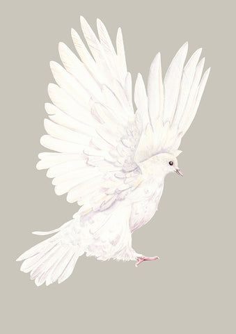 Dove in grey - an open edition fine art print