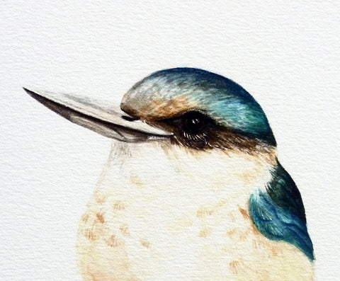 Kotare / Kingfisher