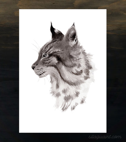 Lynx - an open edition fine art print