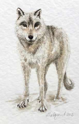 Misty Wolf 2013 - an Original Watercolour Illustration