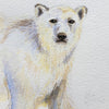 Polar Bear 2011 - an Original Watercolour Illustration