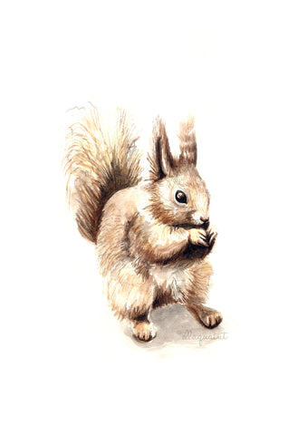 Squirrel - a Timorous Beastie Free Instant Download