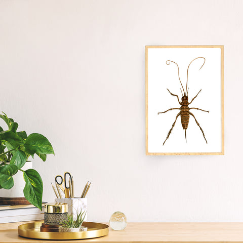 Weta - an open edition Nocturne Print