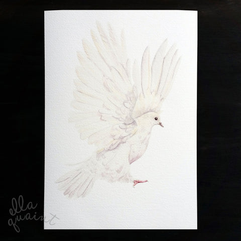 Dove in white - an open edition fine art print