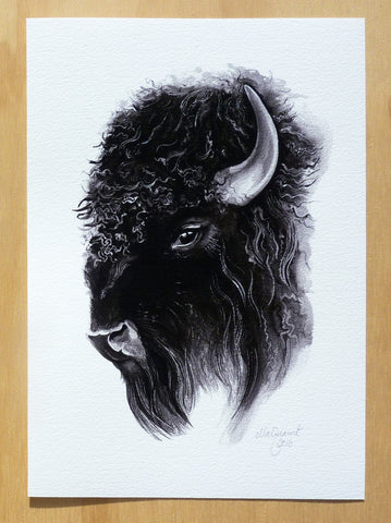 Bison - an open edition fine art print