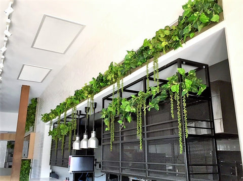 Artificial trailing plants in restaurant