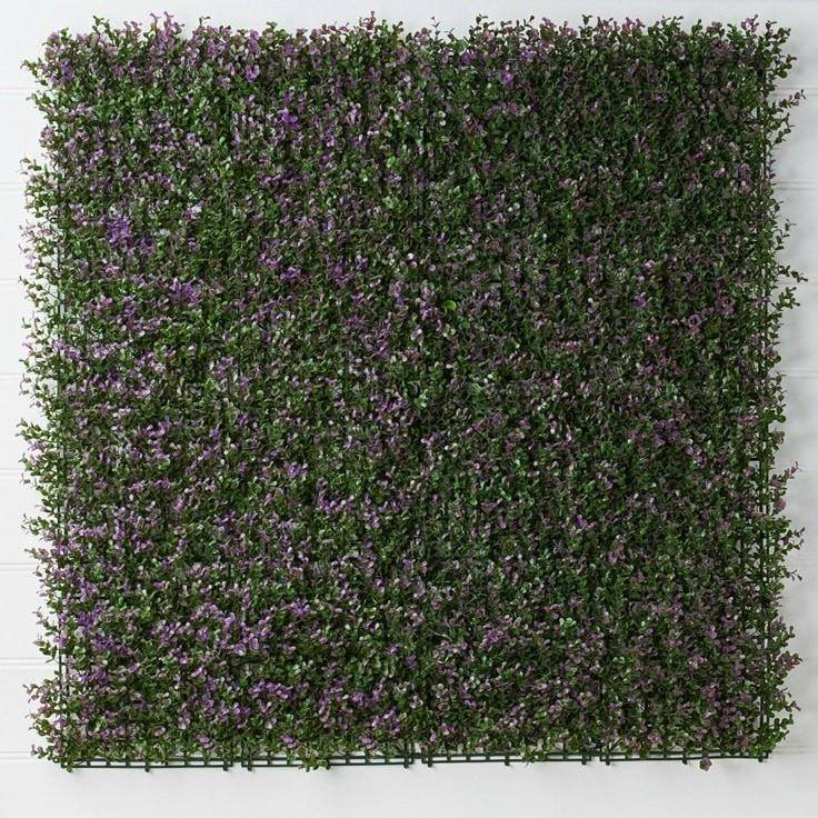 Box Hedge Purple / Green Basic Collection