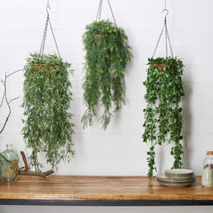 Fern Flat Leaf Garden Hanging Basket Hanging Plants