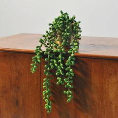 Hanging Trails Beads Foliage