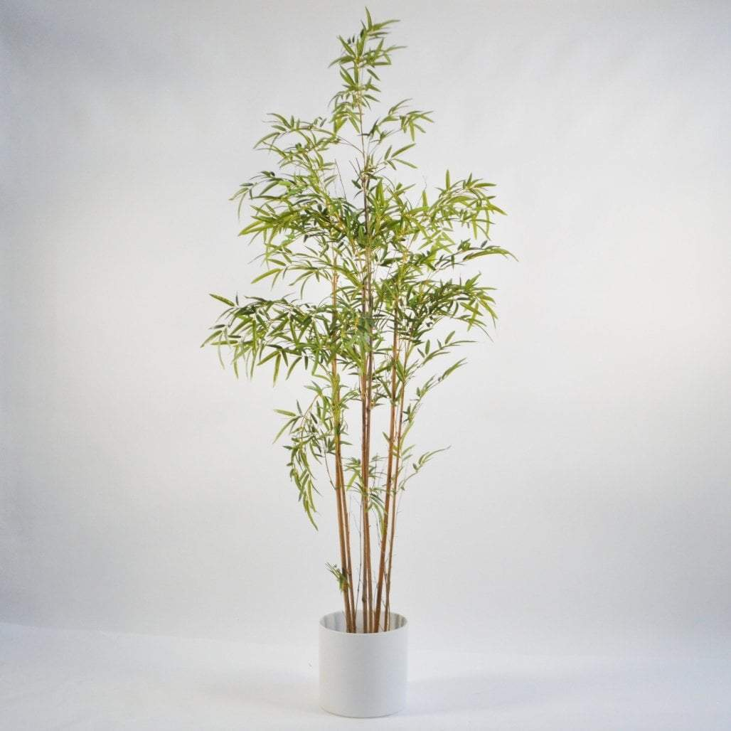 Mini Leaf Bamboo Tree 1.8m Trees
