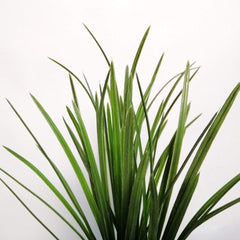 Onion Grass Bush Foliage