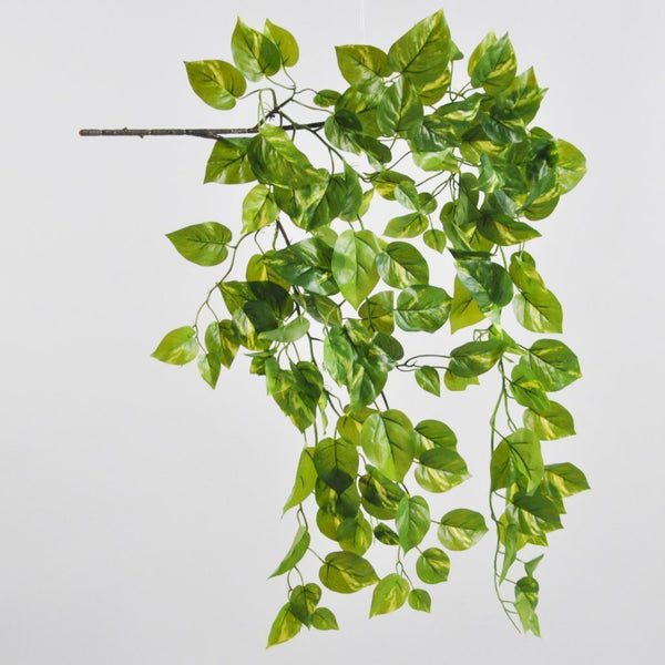 Pothos Hanging Bush 105cm Foliage