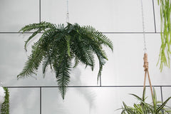 River Fern Foliage