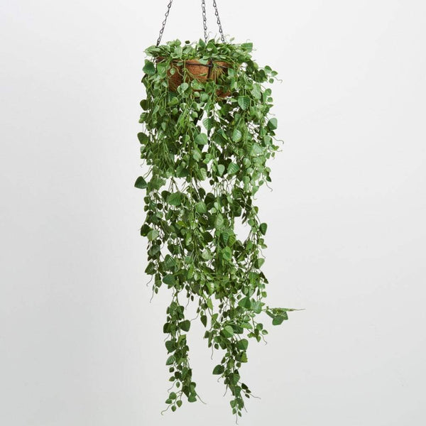 Sky Garden Hanging Basket Hanging Plants