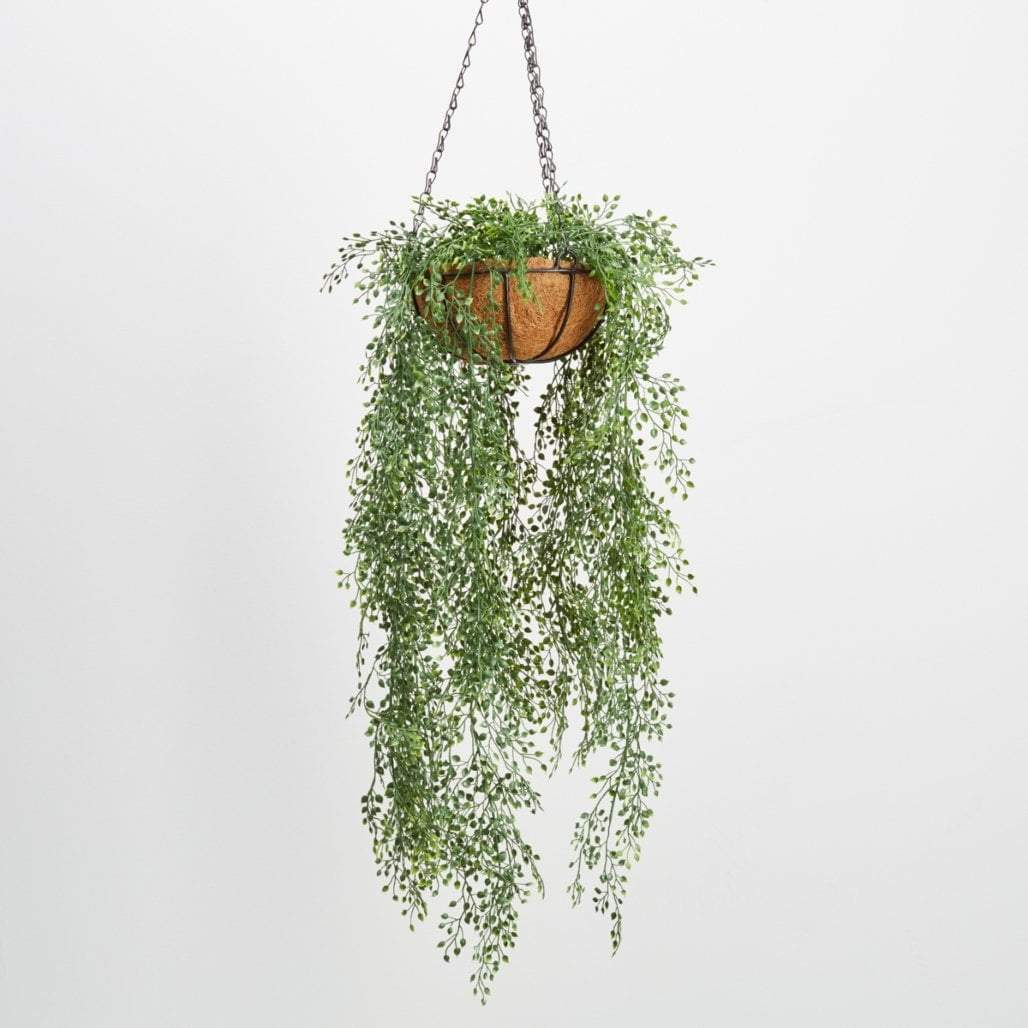 Star Leaf Hanging Basket Hanging Plants