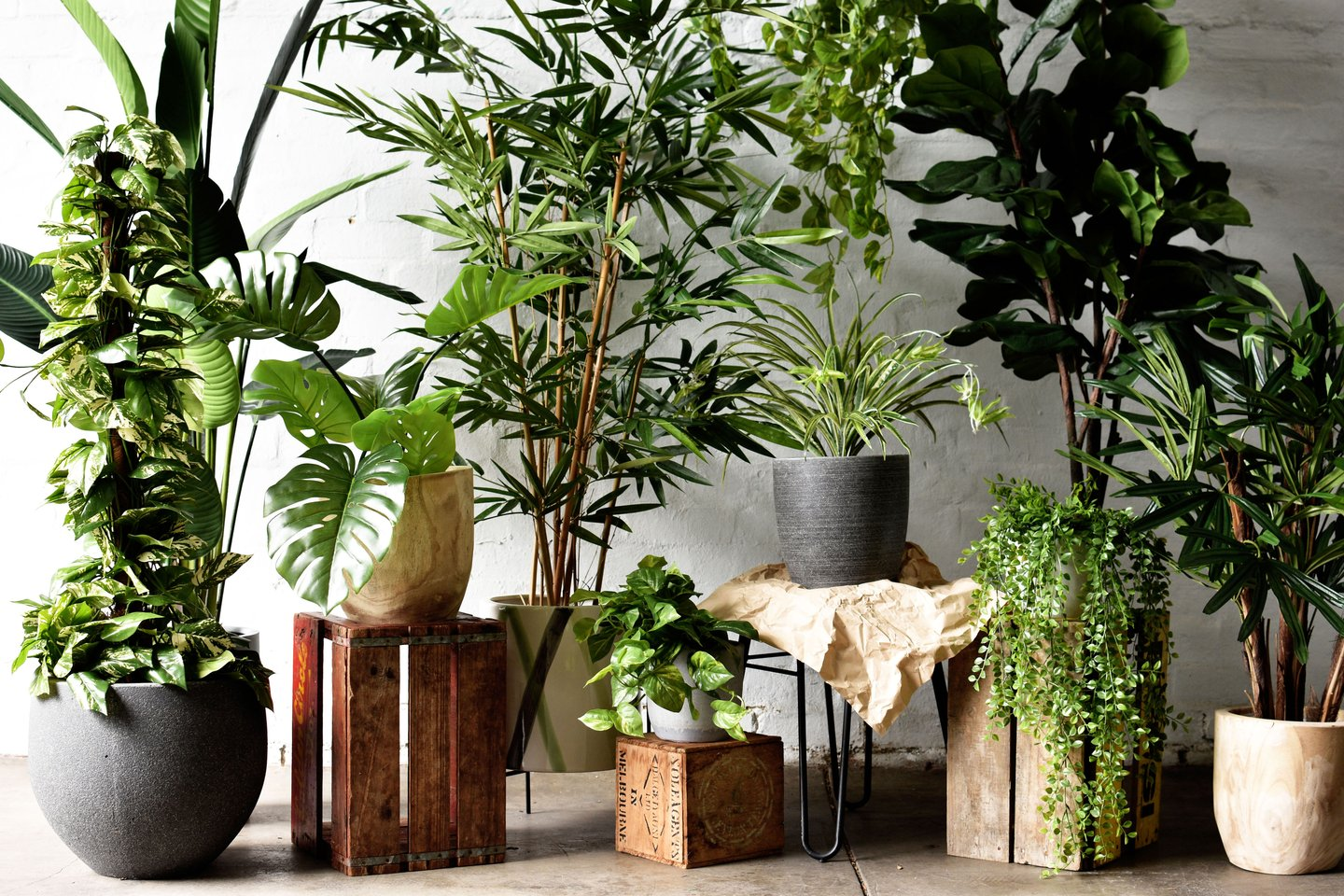 Office Plants: The Secret To Boosting Productivity for 2020