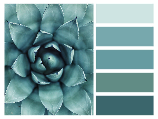 Color Palette Succulents Shades of Tiel