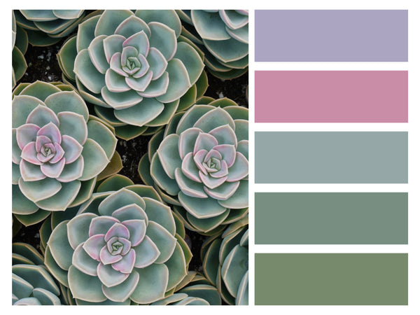 Color Palette Succulents Dark Pastel and Green