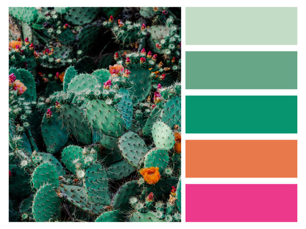 Color Palette Flower Power Cactus Flower Fiesta
